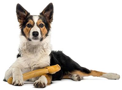 Dog-Laying-Down